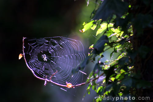 Spider web in Brian Boru's Fort, Killaloe, Co. Clare