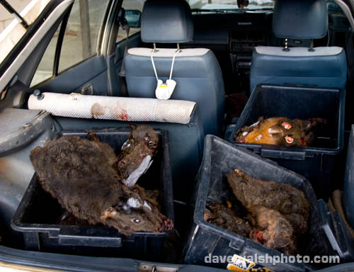 Collected roadkill