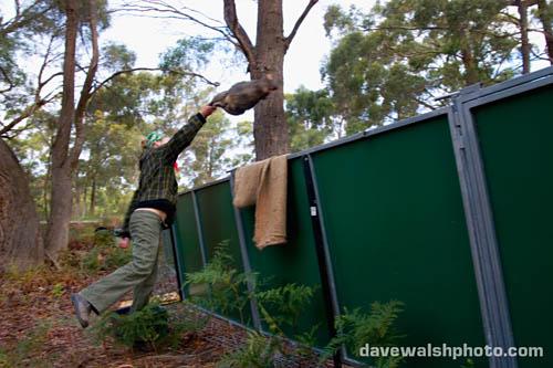Chrissy feeding the Tasmanian Devils