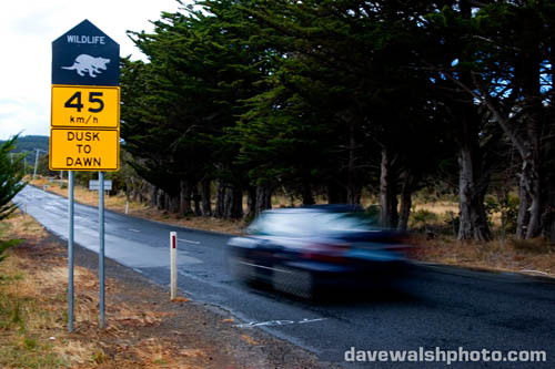 Tasmanian Devil signs near Dunally - from Dusk to Dawn